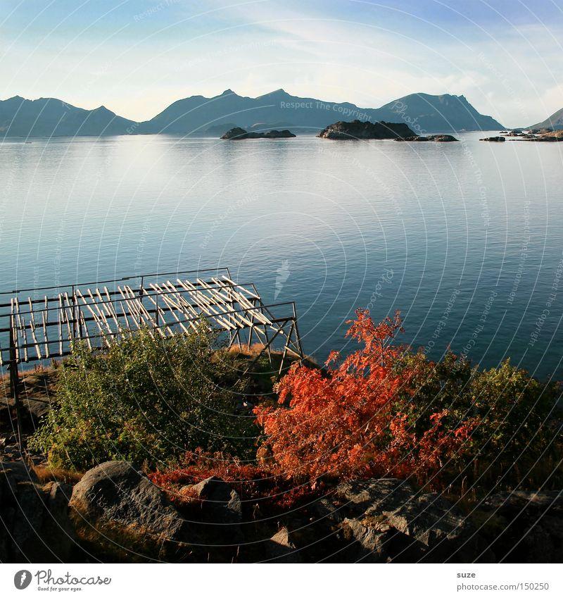 Herbstmeer Trockenfisch Gerüst Fjord Meer Norwegen ruhig Berge u. Gebirge Einsamkeit blau Küste Lofoten Henningsvær Wasser Freiheit Natur