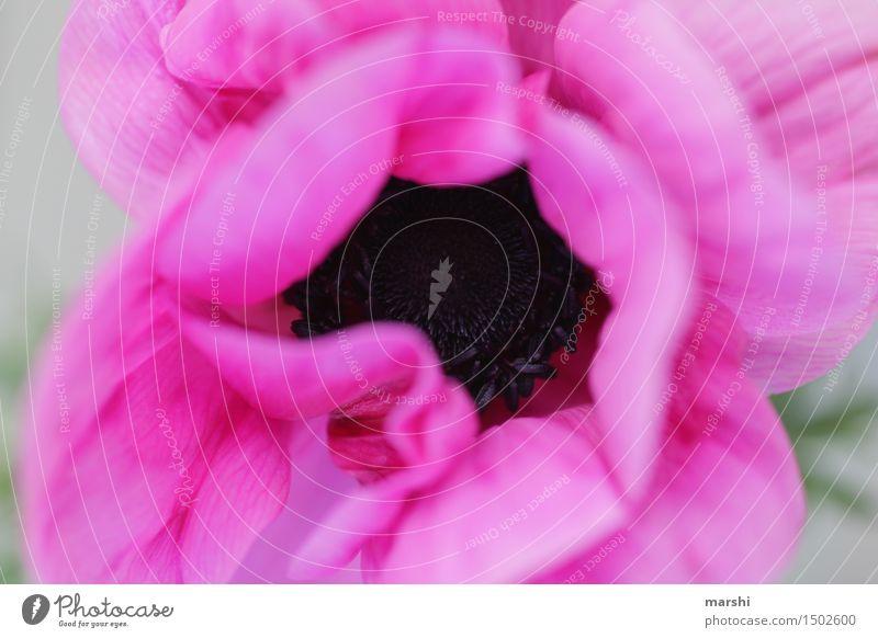 magenta II Natur Landschaft Pflanze Frühling Sommer Blume Blatt Blüte Stimmung Blühend Blütenstempel Blütenknospen Farbfoto Außenaufnahme Nahaufnahme