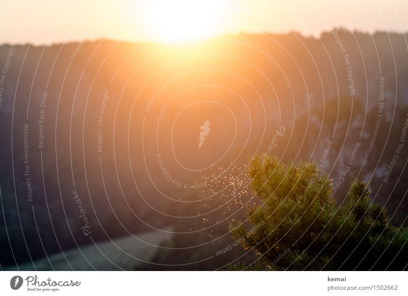 Sommergefühl Abenteuer Ferne Freiheit Umwelt Natur Landschaft Pflanze Sonne Sonnenaufgang Sonnenuntergang Schönes Wetter Wärme Sträucher Felsen