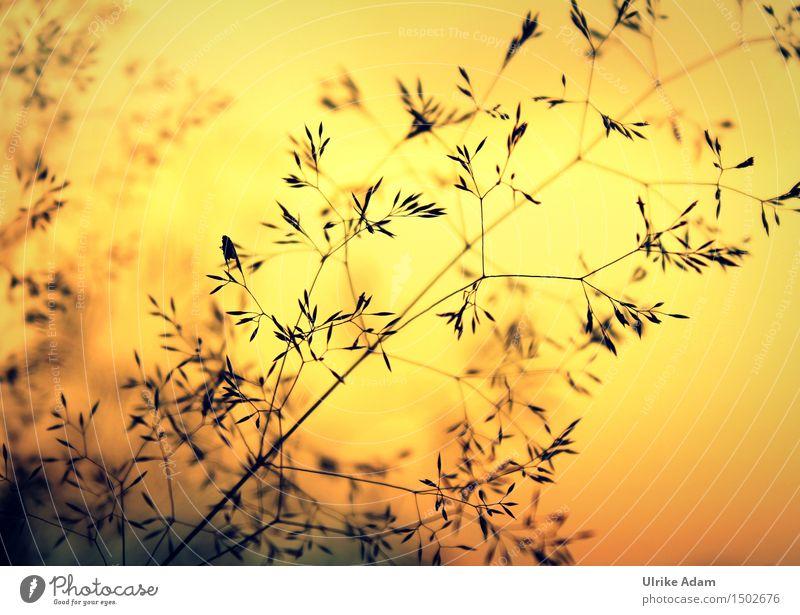 Gräser im Flammenmeer Kunst Natur Pflanze Sonnenaufgang Sonnenuntergang Sonnenlicht Sommer Schönes Wetter Gras Grassamen Samen Wiese schön Wärme weich orange