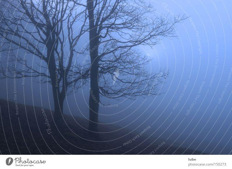 Nebel Nebelbank gruselig Baum unklar grauenvoll Regen Trauer blau Einsamkeit Herbst Verzweiflung