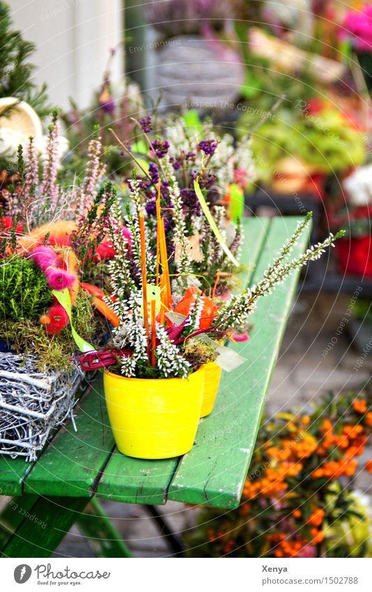Blumentopf Pflanze Blatt Blüte mehrfarbig Angebot Blumenladen Gesteck Farbfoto Außenaufnahme Menschenleer Tag Blühend Blumenhändler Dekoration & Verzierung