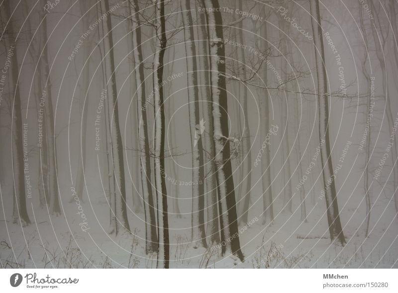 gestreift Baum Baumstamm Holz Nebel Winter Wald Schnee Märchen mystisch Spaziergang nass Traurigkeit