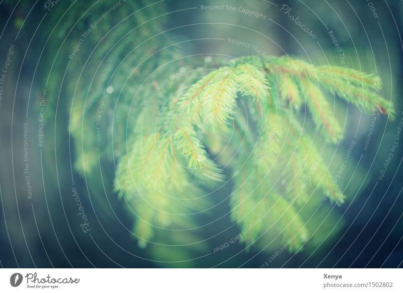 Ast Nadelbaum Bewegung Umwelt Natur Pflanze Herbst Baum Wald grün Zweig Tannennadel Außenaufnahme Experiment Menschenleer Textfreiraum links Tag