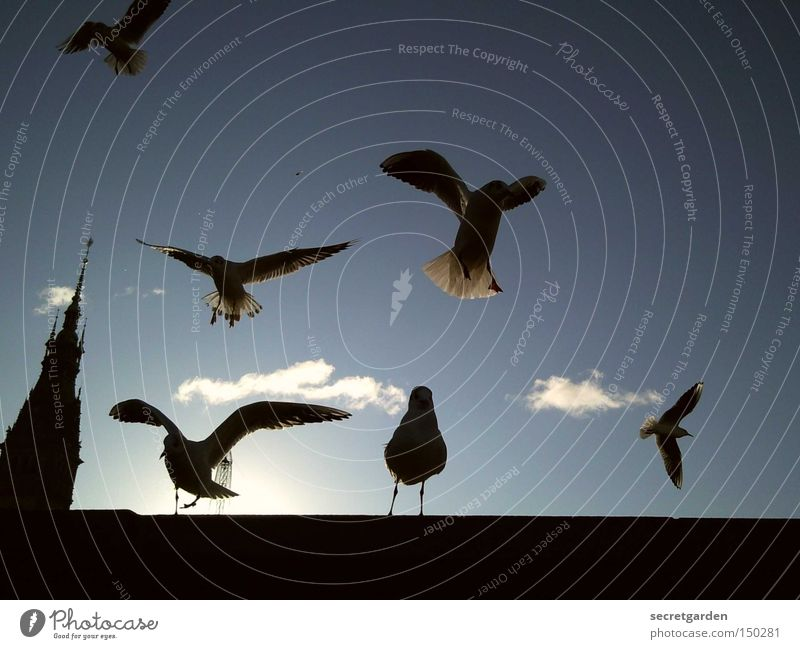 ....und plötzlich kamen alle... Himmel blau Sonne Wolken Winter schwarz kalt Mauer Vogel unten Möwe Verkehrswege flattern