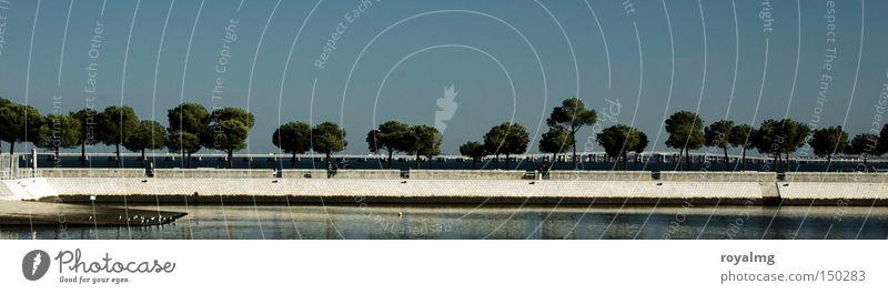 Wald Natur Baum Meer blau Sommer Herbst Küste groß Horizont Hafen Reihe Seeufer Flussufer Allee Panorama (Bildformat) Lissabon