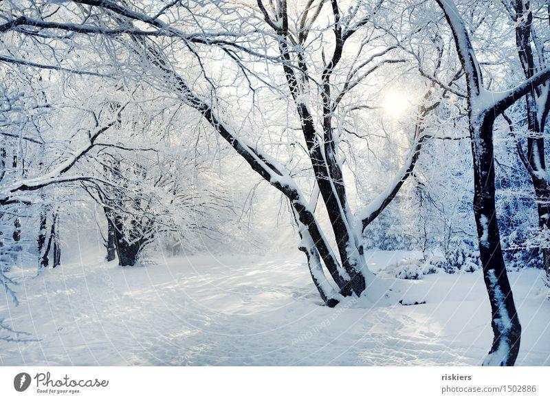 Wintermärchen Natur Sonne Erholung Landschaft Einsamkeit ruhig Winter Wald Umwelt Schnee Schneefall Idylle einzigartig Schönes Wetter