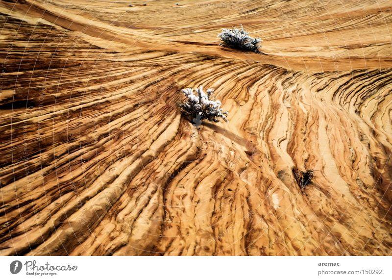 Monotonie USA Amerika Zion National Park Nationalpark Sandstein Linie Winter Sträucher Landschaft Natur braun Felsen Berge u. Gebirge