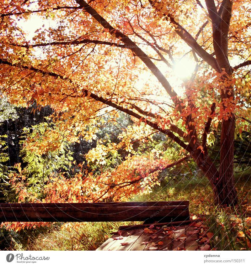 Rote Phase Natur schön Baum Sonne Blatt Herbst Gefühle Landschaft Zeit fallen Vergangenheit Erinnerung Zauberei u. Magie Jahreszeiten Herz-/Kreislauf-System