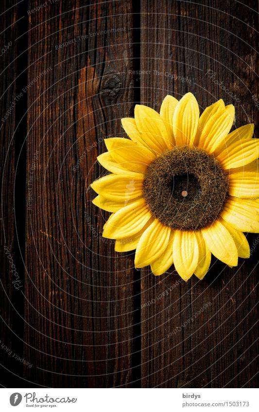 sunny Blume Blüte Sonnenblume Mauer Wand Holzwand Blühend Duft leuchten ästhetisch Freundlichkeit positiv rund braun gelb schön Frieden Kreativität Umweltschutz