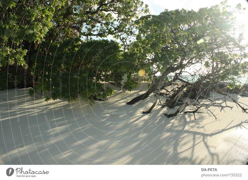 wild dream - Malediven weiß Sonne Meer Strand Ferien & Urlaub & Reisen träumen Küste Sträucher