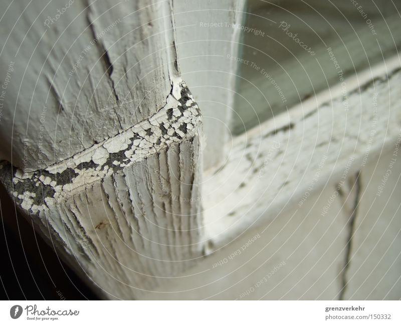 Lackschuppen Nahaufnahme Makroaufnahme Wetter Fenster Holz Glas weiß Vergänglichkeit Riss Fensterlack Rissbildung Fensterflügel Fensterscheibe Fensterrahmen