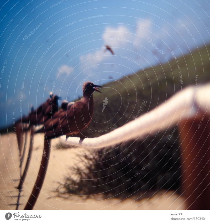 Tippi Hedren Vogel Umweltschutz Tierschutz Möwenvögel Artenschutz