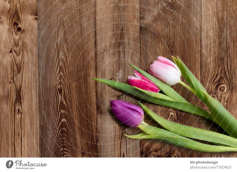 Three tulips on a wooden background Blume Hintergrundbild Feste & Feiern Blühend Ostern Tulpe Valentinstag Muttertag