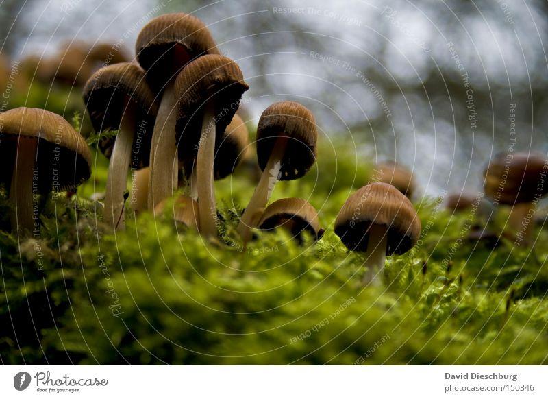 Hutträger Pilz Moos Pflanze Natur Boden Motivation grün saftig braun Stengel Lebewesen Gift Herbst Gemüse ungenießbar
