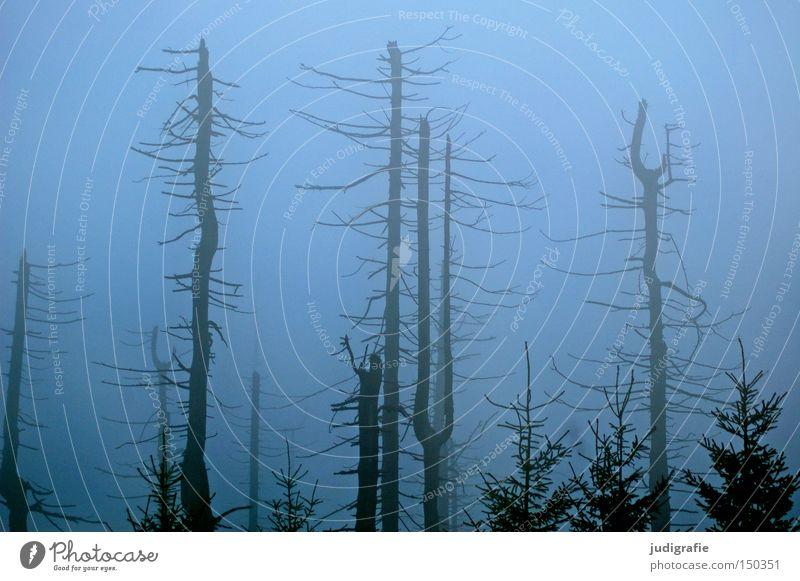 Dämmerung senkte sich von oben Natur Baum Winter Farbe Wald kalt Herbst Nebel Umwelt mystisch Dunst November Harz Brocken