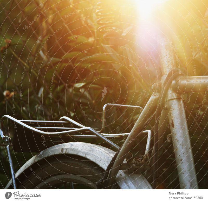 Der leuchtende Sattel Fahrrad Licht Sonne Fahrradsattel Gegenlicht alt Lampe Beleuchtung Rad Detailaufnahme retro Freizeit & Hobby Gepäckträger