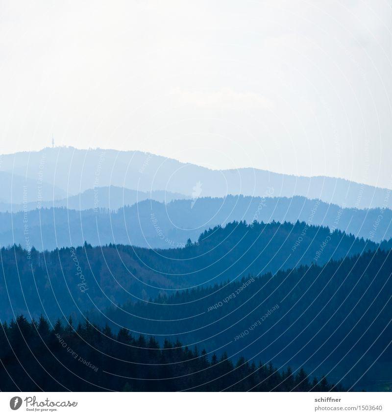 den Hochblauen | blau machen Umwelt Natur Landschaft Schönes Wetter Pflanze Baum Wald Hügel Berge u. Gebirge Gipfel Schwarzwald Schauinsland Niveau Ferne