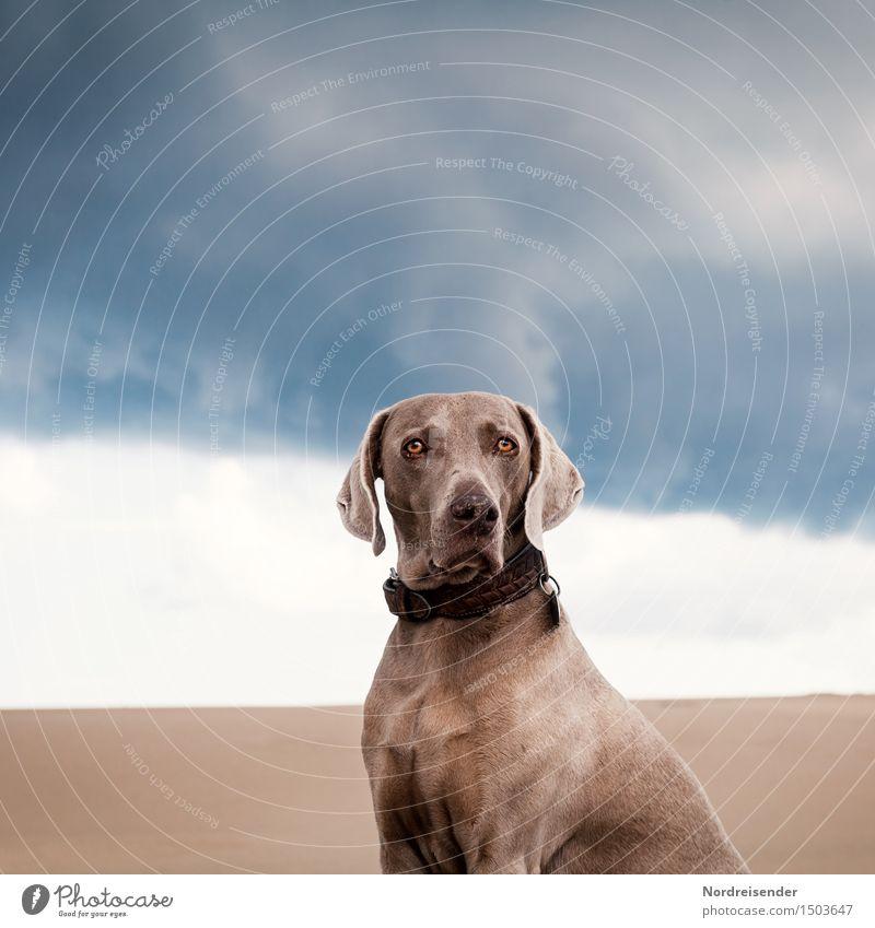 Unterwegs mit Tia Hund Ferien & Urlaub & Reisen blau weiß ruhig Tier Ferne braun Sand elegant ästhetisch beobachten Freundlichkeit Gelassenheit Vertrauen Wüste