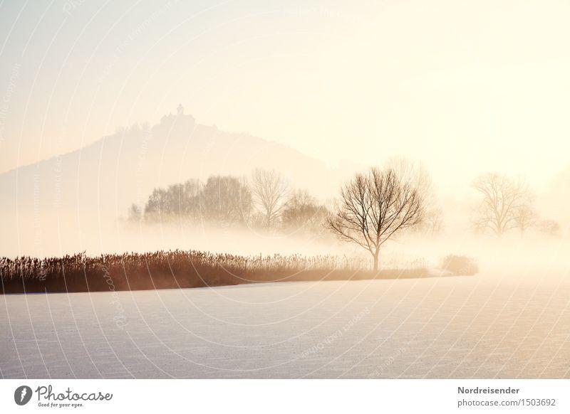 Kalt.... Natur Baum Landschaft ruhig Winter kalt Schnee See Stimmung hell Nebel Eis frisch Ausflug Klima Schönes Wetter