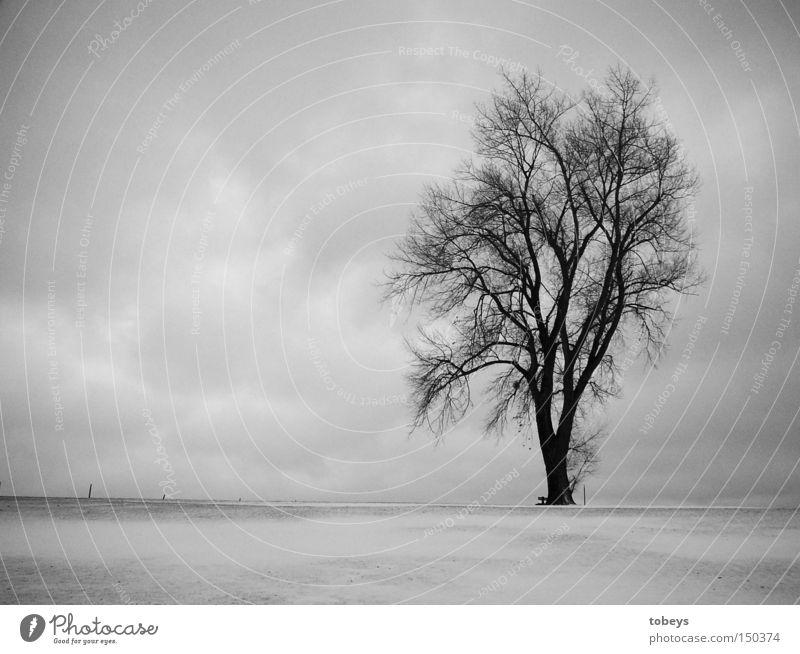 Alpha-Zeit Natur Baum Einsamkeit Winter kalt Schnee Alpen Allgäu Schwarzweißfoto