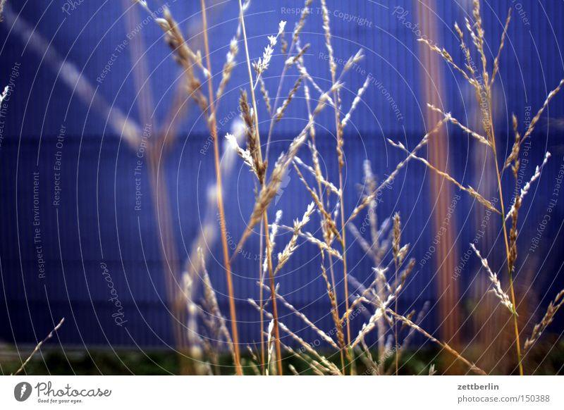 Gras blau Lampe Herbst Wand Park Hoffnung Halm Riedgras Regierungssitz Spreebogen