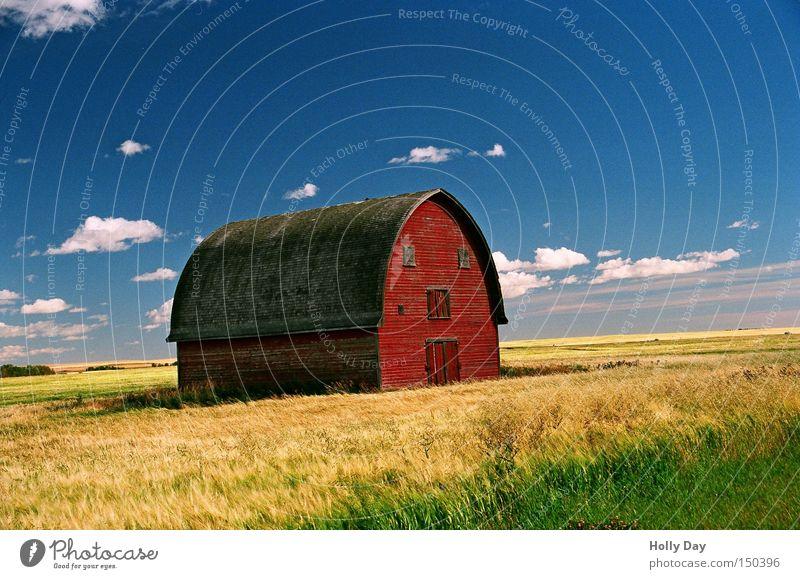 'ne Scheune steht im Felde, ganz still und stumm... rot gelb Ernte Wolken blau Landwirtschaft Bauernhof Kanada Alberta Weizen Gesicht