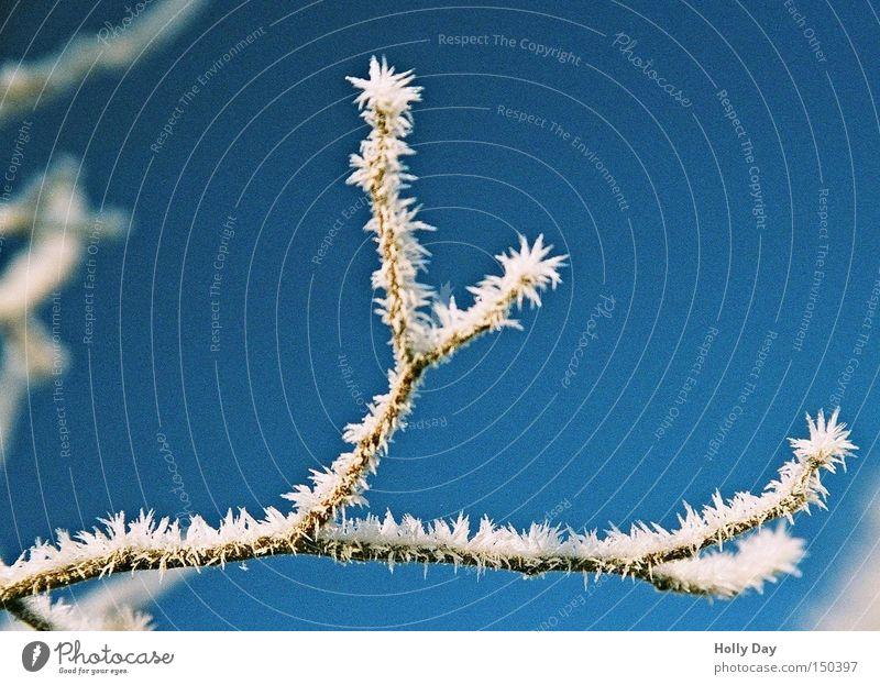 Eisige Stimmung Himmel Baum blau Winter kalt Schnee Eis Frost Ast Schönes Wetter Zweig Blauer Himmel Eiszapfen Januar Eispickel