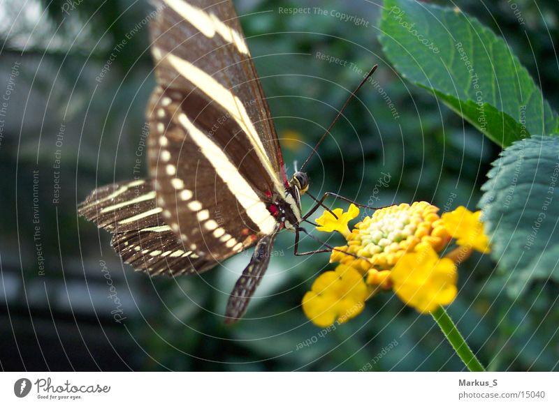 Schmetterling2 Blüte braun weiß schön