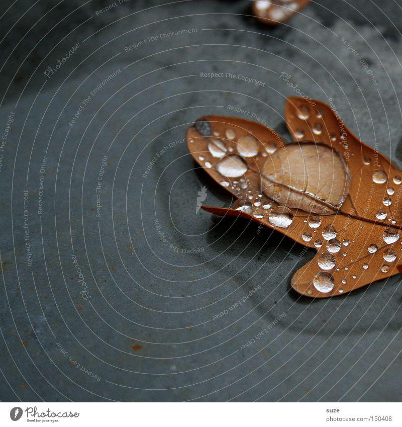 Sammelstelle Natur Wassertropfen Herbst Blatt braun Vergänglichkeit Eichenblatt November Jahreszeiten Herbstlaub gefallen alt trist Einsamkeit Traurigkeit