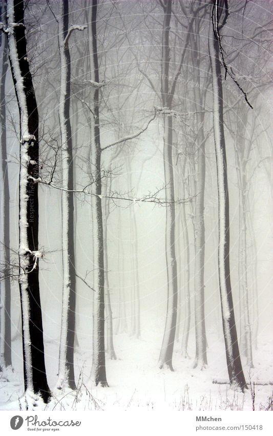 Zauberwald Wald Baum Nebel Schnee weiß schwarz Märchen Märchenwald Ast mystisch Verhext Waldlichtung Hexe Zauberer Einsamkeit Winter