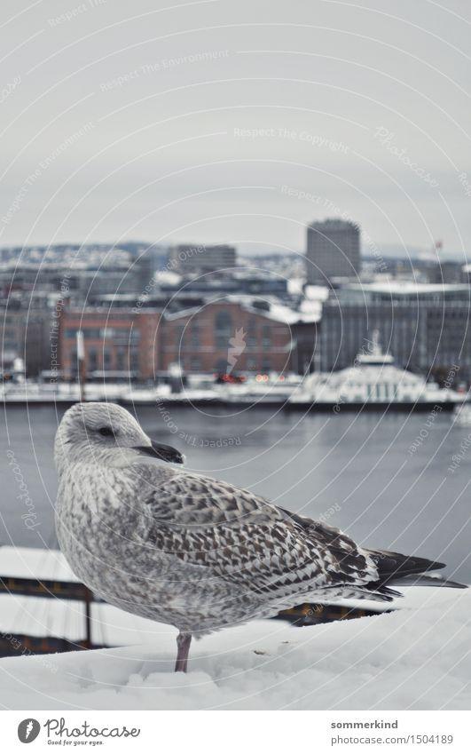 Måke Himmel Winter Eis Frost Schnee Oslo Norwegen Stadt Hauptstadt Hafenstadt Skyline Tier Wildtier Vogel Möwe 1 kalt maritim blau grau weiß ruhig Windstille