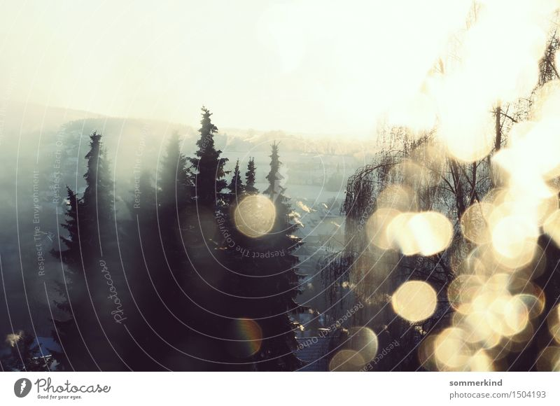 Winterfenster I Natur Wassertropfen Himmel Sonnenlicht Eis Frost Schnee Baum Wald Dorf Kleinstadt gold türkis weiß glänzend Lichtbrechung Glanzlicht Sonnenfleck