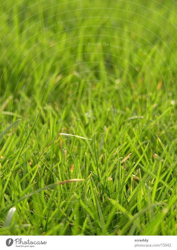 Wiese Sonne grün Gras Frühling saftig