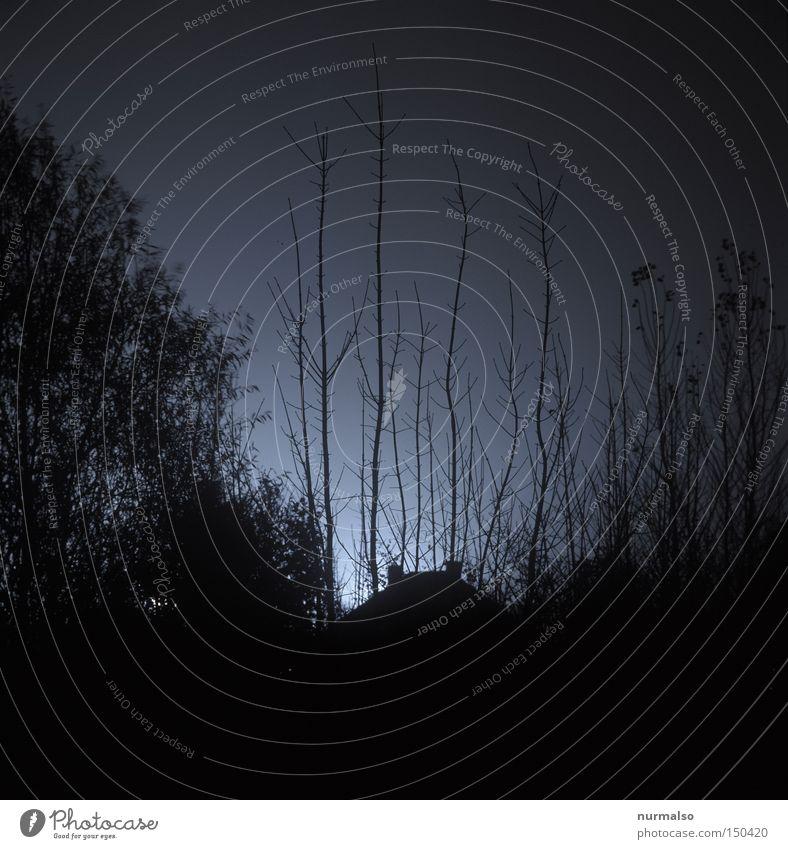 Nachtwachser Wachstum Haus Dach Stimmung Zeit dunkel Mitternacht gruselig Langzeitbelichtung Gefühle TLR Geister u. Gespenster Angst Kriminalroman Filmindustrie