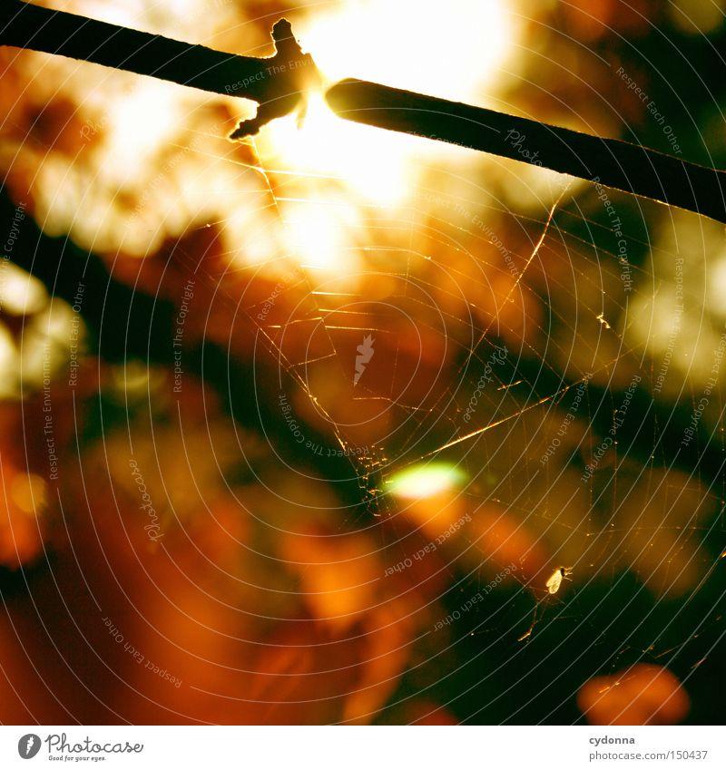 Rote Phase II Natur schön Baum Sonne Blatt Herbst Gefühle Landschaft Zeit ästhetisch fallen Vergangenheit Erinnerung Zauberei u. Magie Spinnennetz Herz-/Kreislauf-System