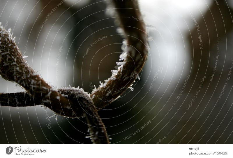 Schlaufe Natur Pflanze Winter kalt Frost Ast gefroren drehen