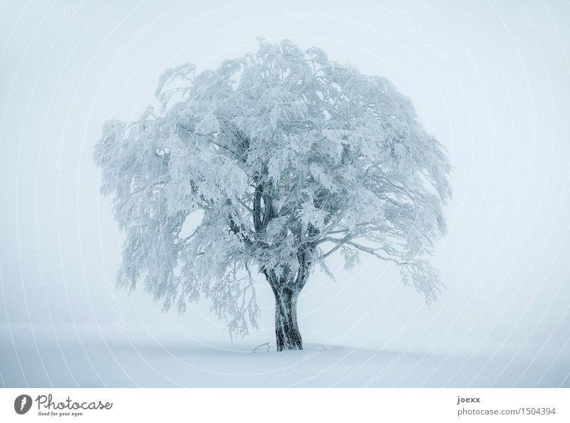 Zu kalt blau weiß Baum Winter schwarz Schnee Schneefall Nebel Eis groß Frost