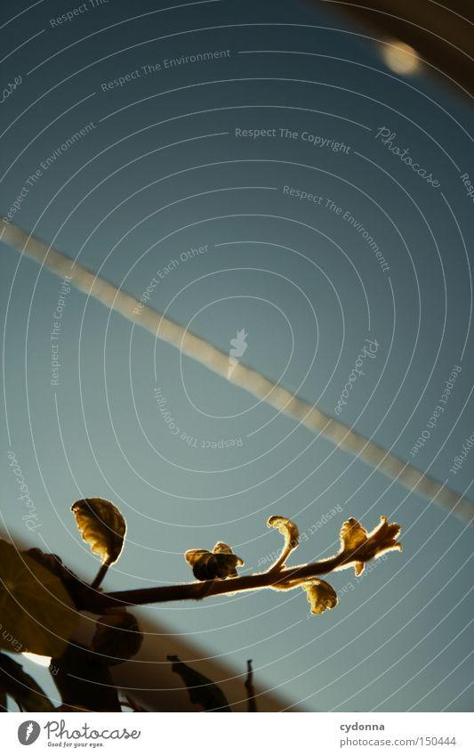 Gegen den Strich gehen Linie Pflanze Leben Wachstum Himmel Balkon blau gegen Natur Unschärfe Detailaufnahme Entscheidung Freiheit Froschperspektive Wäscheleine