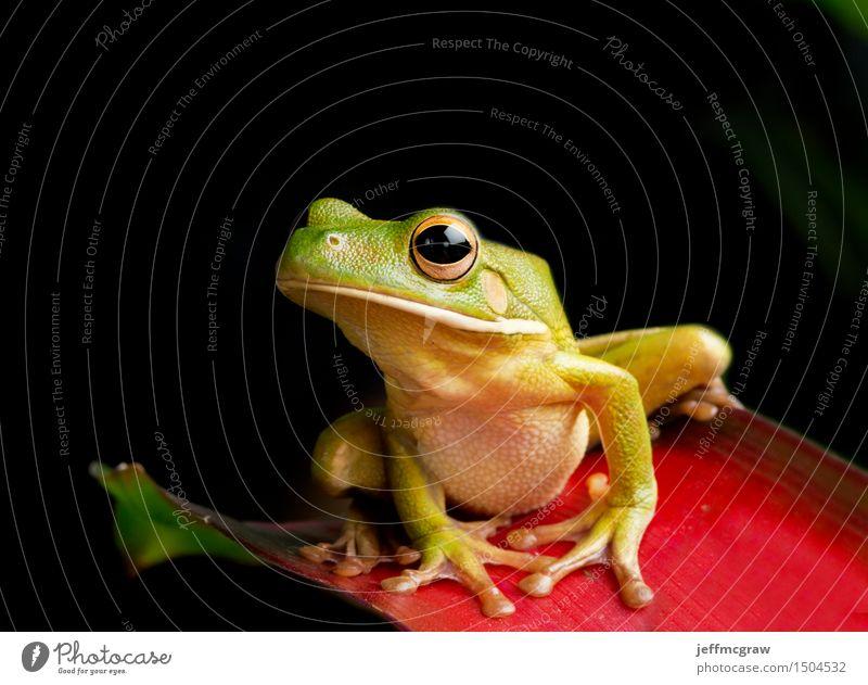 baby frosch auf blumen knospe ein lizenzfreies stock foto von photocase. Black Bedroom Furniture Sets. Home Design Ideas