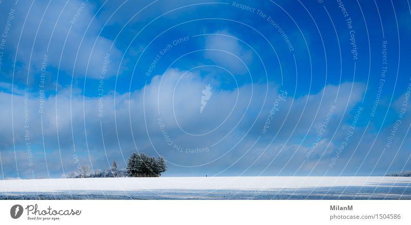 Weiter Weg sportlich Fitness Zufriedenheit Ferne Freiheit Schnee Joggen Natur Landschaft Wolken Winter Schönes Wetter Feld Wald Bewegung frieren laufen