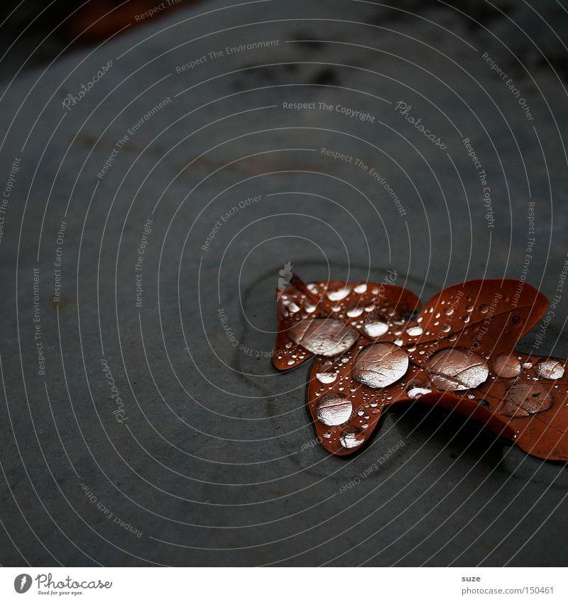 Blätter weinen nicht ... Natur Blatt Einsamkeit Herbst grau Traurigkeit braun Wassertropfen trist Vergänglichkeit Jahreszeiten November Herbstlaub gefallen Eichenblatt