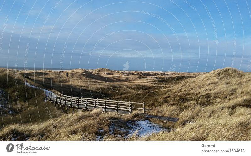 Düne in blau Umwelt Natur Landschaft Pflanze Himmel Wolken Horizont Winter Schönes Wetter Eis Frost Gras Nordsee Insel Amrum Menschenleer wandern Unendlichkeit