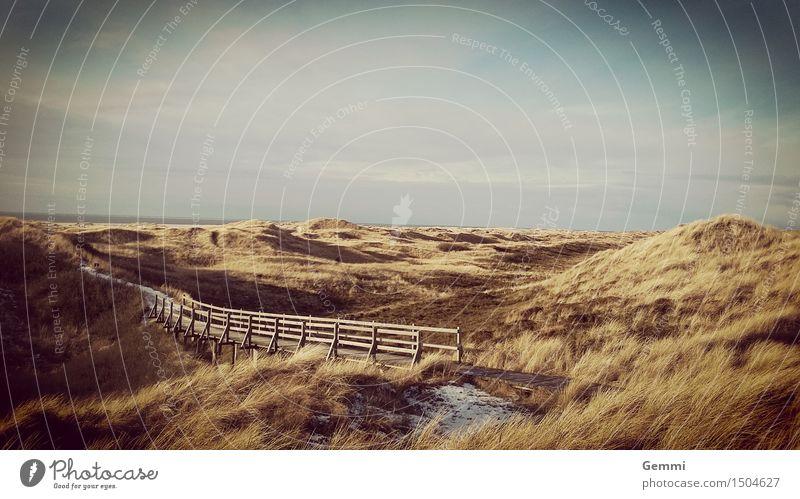 Winterdüne Ferien & Urlaub & Reisen Tourismus Ausflug Meer Insel wandern Natur Landschaft Pflanze Eis Frost Gras Küste Nordsee Stranddüne Wege & Pfade gehen