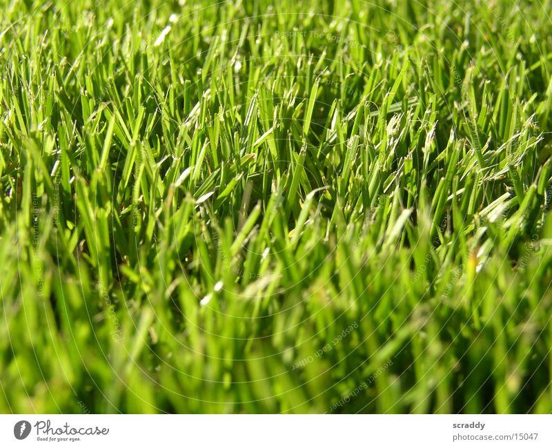 Gras grün Wiese Feld Halm saftig