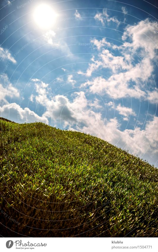 Wiese im Frühling Himmel Natur blau grün Sommer weiß Sonne Erholung Landschaft Blatt Wolken Gras Stil Linie Design