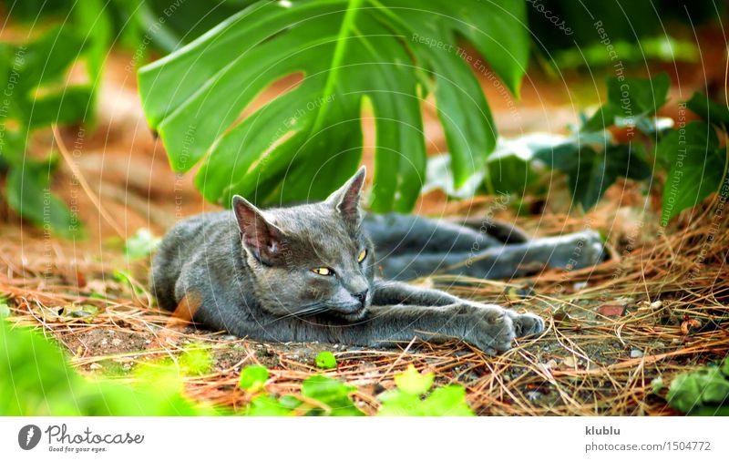 Ein Straßenkatzenstillstehen schön Spielen Baby Freundschaft Natur Tier Stadt Behaarung Haustier Katze Pfote Stein sitzen klein lustig niedlich grau schwarz