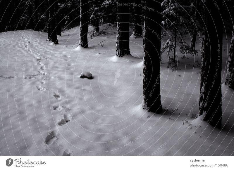 Spuren im Schnee Natur Baum Winter ruhig Wald dunkel kalt Eis Frost gefroren Reihe frieren Fremder Existenz