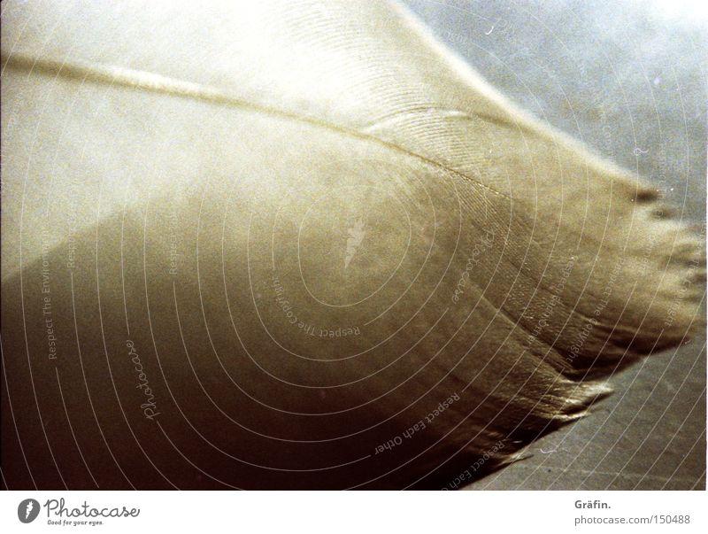 Feder Makroaufnahme weiß zart Licht Sonne Vogel Schwan Nahaufnahme fliegen fallen Detailaufnahme