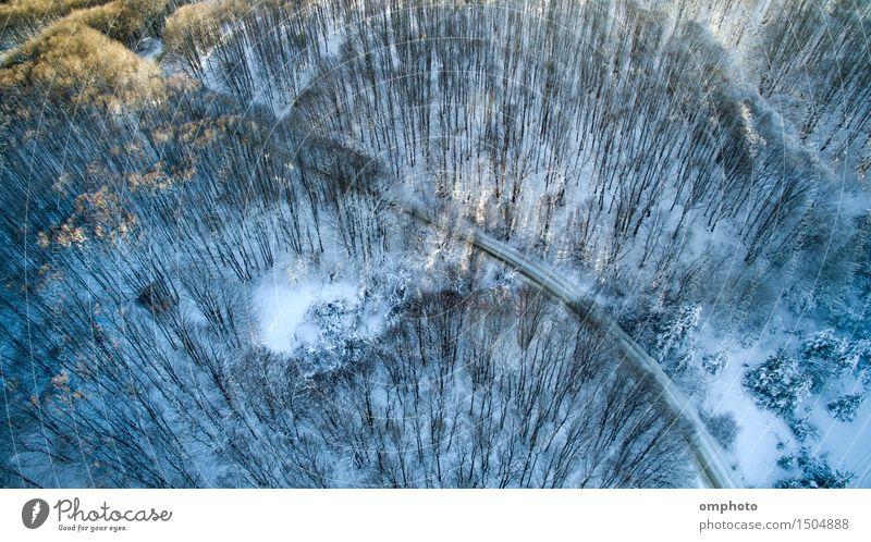 Luftaufnahme eines Laubwaldes mit hohen Bäumen und Straße im Winter Sonne Schnee Berge u. Gebirge Natur Landschaft Baum Wald frieren blau weiß laubabwerfend